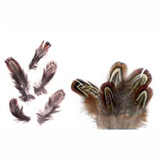 Small Natural Pheasant Feathers