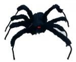 Furry Amazon Spider