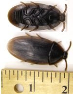 Soft Brown Rubber Cockroach