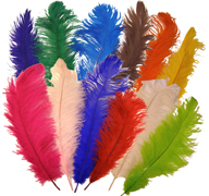 Ostrich Plumes & Feathers - 16 in - 22 in tall