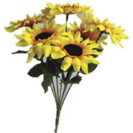 Sunflower Bush x 7