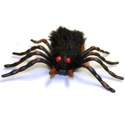 Cave Dwelling Furry Trantula Spider