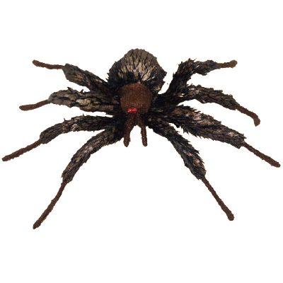 Rainforest Tree Spider Brown Black